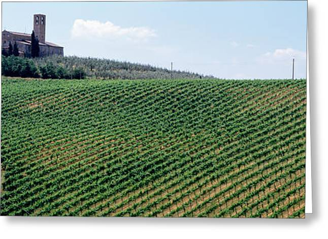 Vineyard Landscape Greeting Cards - Vineyards And Olive Grove Outside San Greeting Card by Panoramic Images