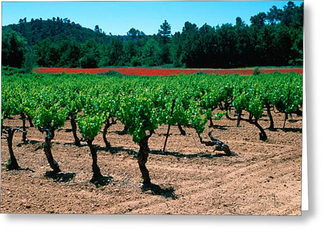 Winemaking Greeting Cards - Vineyards And Red Poppies In Summer Greeting Card by Panoramic Images
