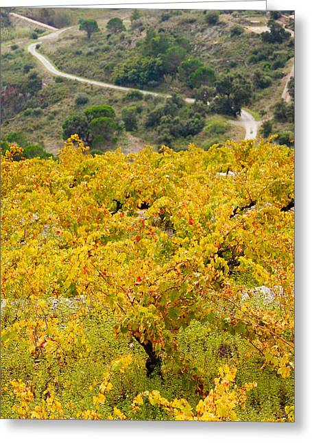 Languedoc Greeting Cards - Vineyards, Collioure, Vermillion Coast Greeting Card by Panoramic Images