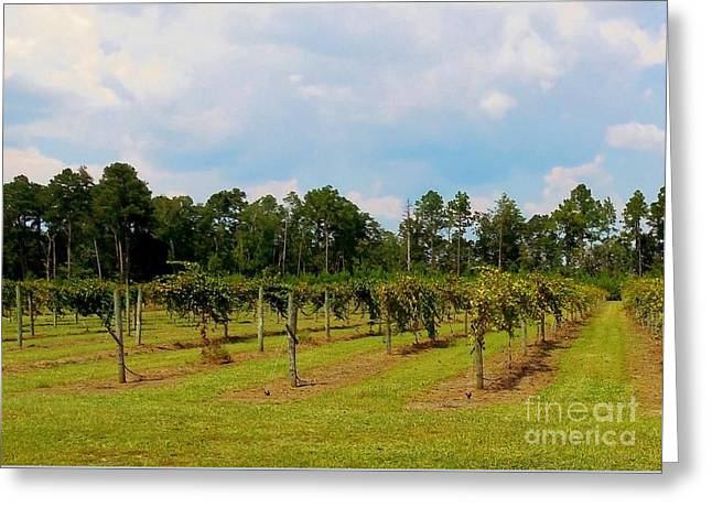 South West France Greeting Cards - Vineyards Greeting Card by Eloise Schneider