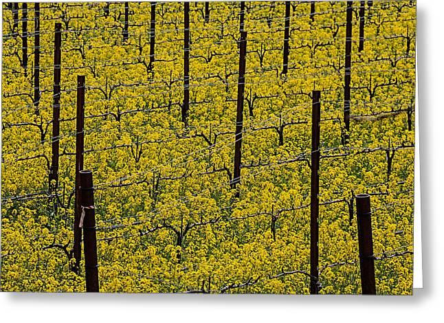 California Vineyard Greeting Cards - Vineyards full of mustard grass Greeting Card by Garry Gay