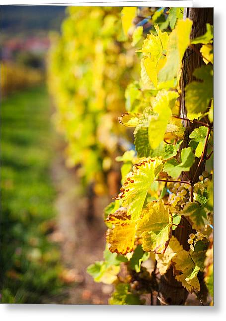 Route Des Vins Greeting Cards - Vineyards In Autumn, Mittelbergheim Greeting Card by Panoramic Images