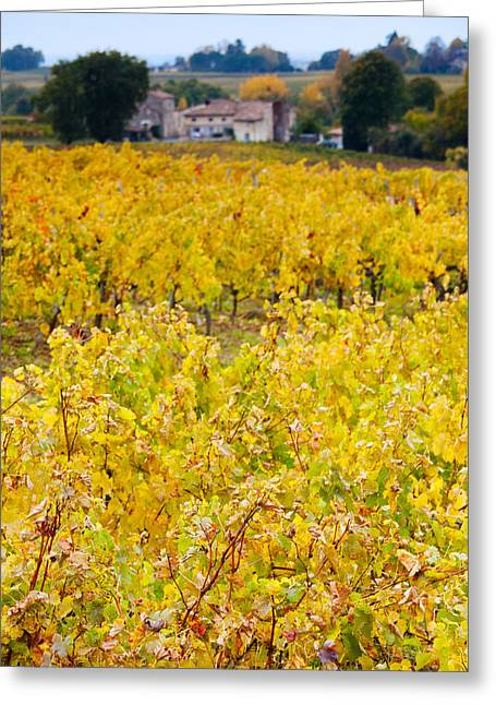 Winemaking Photographs Greeting Cards - Vineyards In Autumn, Montagne, Gironde Greeting Card by Panoramic Images