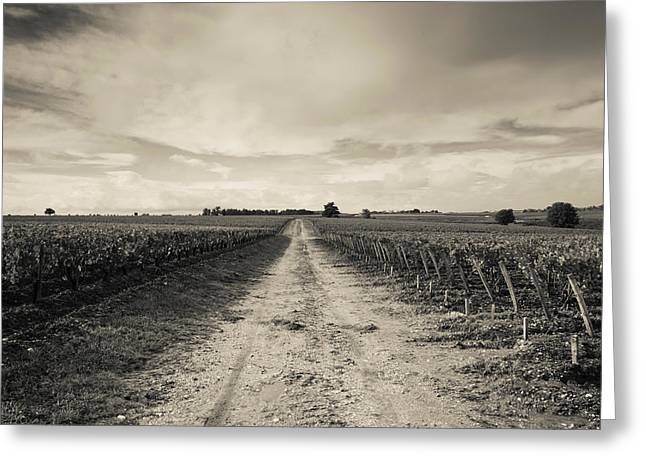 Vineyards In Autumn, Pauillac, Haut Greeting Card by Panoramic Images