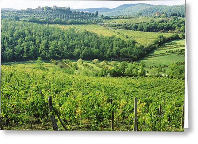 Vineyard Landscape Greeting Cards - Vineyards In Chianti Region, Tuscany Greeting Card by Panoramic Images