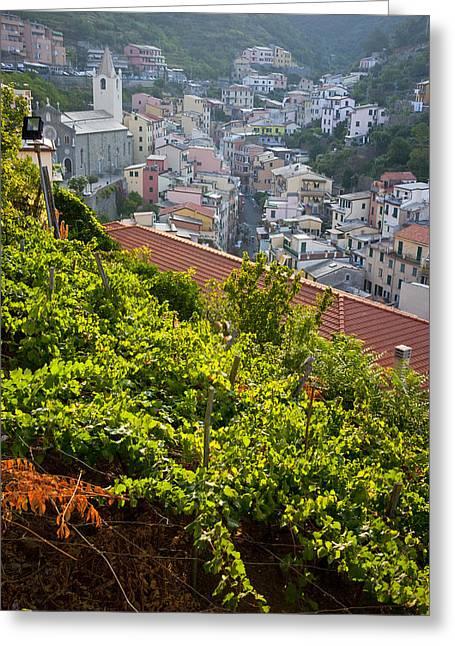 Italian Wine Greeting Cards - Vineyards In Riomaggiore, Cinque Terra Greeting Card by Carlos Sanchez Pereyra