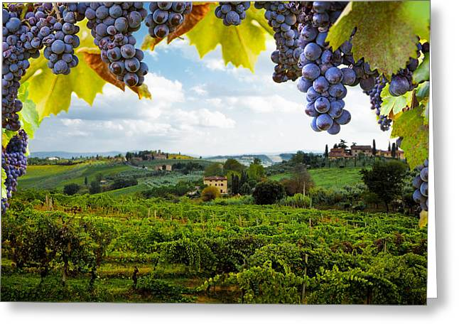 Siena Italy Greeting Cards - Vineyards in San Gimignano Italy Greeting Card by Susan  Schmitz
