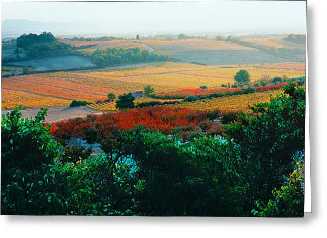 Vineyard Scene Greeting Cards - Vineyards In The Late Afternoon Autumn Greeting Card by Panoramic Images