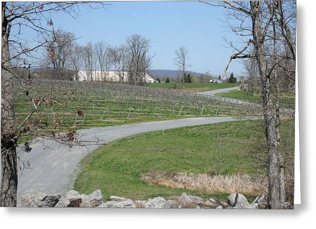 Winery Greeting Cards - Vineyards in VA - 12122 Greeting Card by DC Photographer