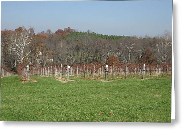 Vineyards In Va - 121228 Greeting Card by DC Photographer