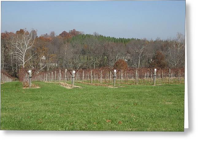 Vineyard Greeting Cards - Vineyards in VA - 121228 Greeting Card by DC Photographer
