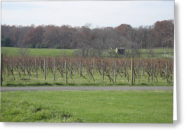 Vineyard Greeting Cards - Vineyards in VA - 121234 Greeting Card by DC Photographer