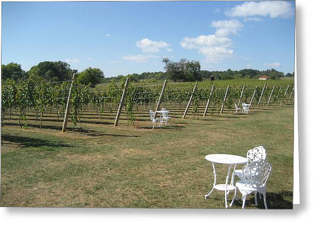 Vineyard Greeting Cards - Vineyards in VA - 121240 Greeting Card by DC Photographer