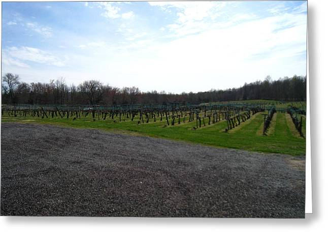 Glasses Greeting Cards - Vineyards in VA - 121267 Greeting Card by DC Photographer