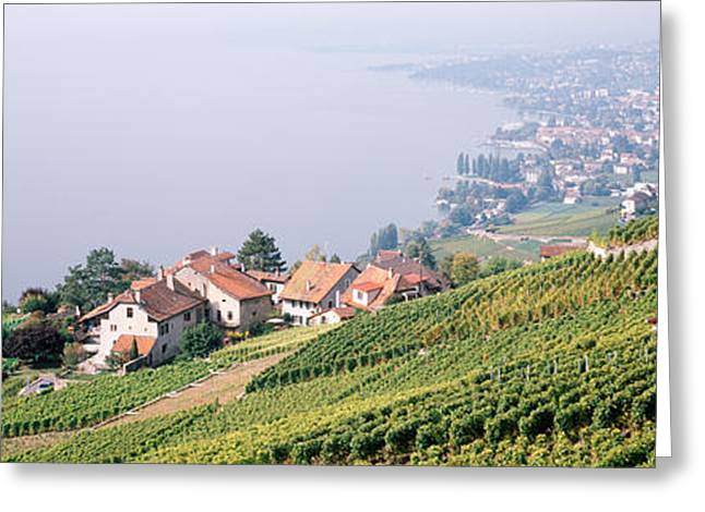 Grape Vineyard Greeting Cards - Vineyards, Lausanne, Lake Geneva Greeting Card by Panoramic Images
