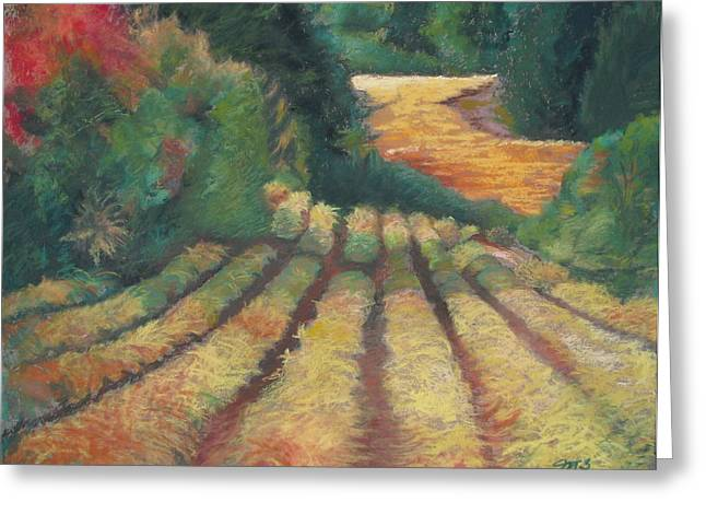 Row Pastels Greeting Cards - Vineyards Greeting Card by Marilyn Mull