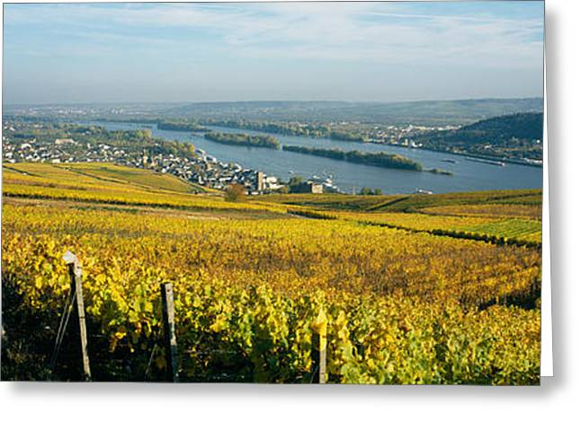 Winemaking Greeting Cards - Vineyards Near A Town, Rudesheim Greeting Card by Panoramic Images