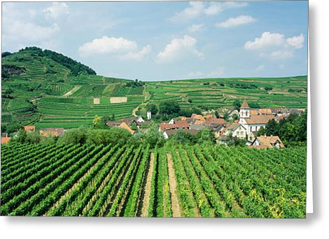 Vineyards Near A Village, Oberbergen Greeting Card by Panoramic Images
