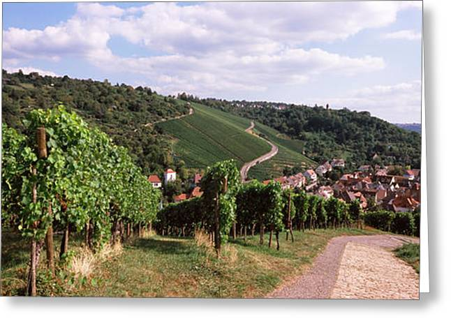 Stuttgart Greeting Cards - Vineyards, Obertuerkheim, Stuttgart Greeting Card by Panoramic Images