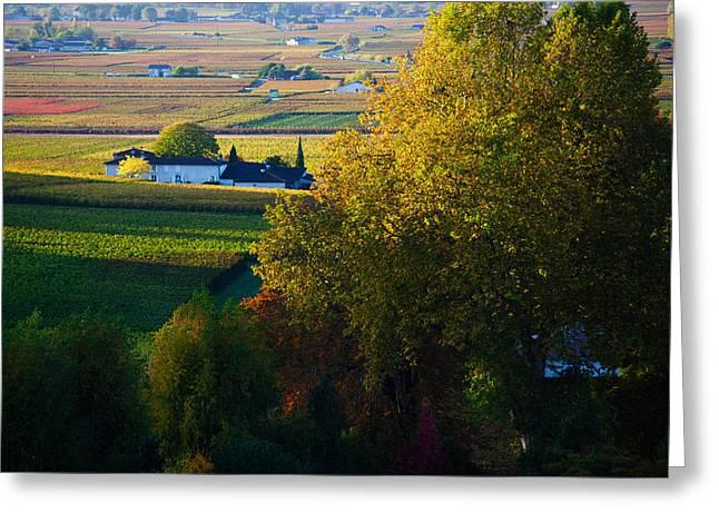 Winemaking Greeting Cards - Vineyards, Saint-emilion, Gironde Greeting Card by Panoramic Images