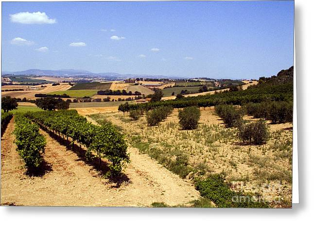 Marciano Greeting Cards - Vineyards Greeting Card by Tim Holt