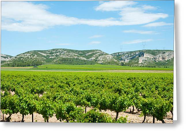 Winemaking Greeting Cards - Vineyards With Hills In The Background Greeting Card by Panoramic Images