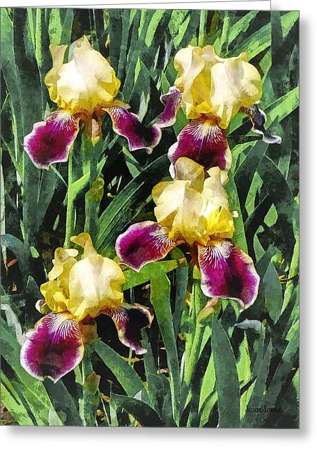 Irises Greeting Cards - Vingolf Iris Greeting Card by Susan Savad