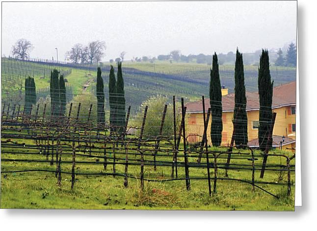 Metal Vineyard Print Greeting Cards - Vino Bello Vineyard Greeting Card by Wendy Raatz Photography