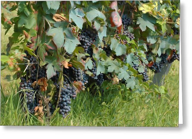 Grape Vineyard Greeting Cards - Vintage 2014 Greeting Card by Guido Strambio