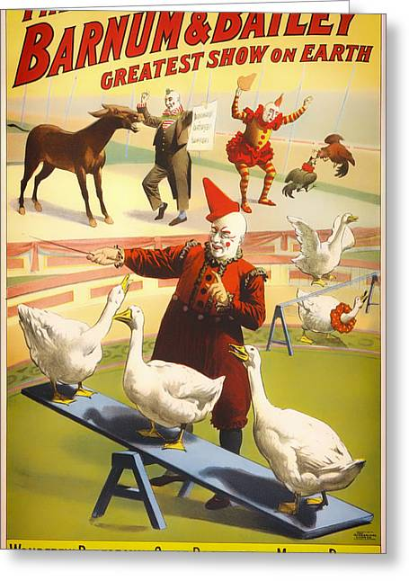 Geese Drawings Greeting Cards - Vintage Barnum and Bailey Poster - 1900 Greeting Card by Mountain Dreams