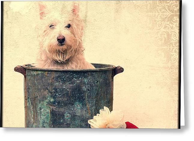 Westie Greeting Cards - Vintage Bathtime Greeting Card by Edward Fielding