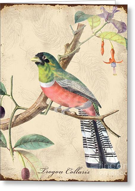 Parrot Art Print Greeting Cards - Vintage Bird Study-A Greeting Card by Jean Plout