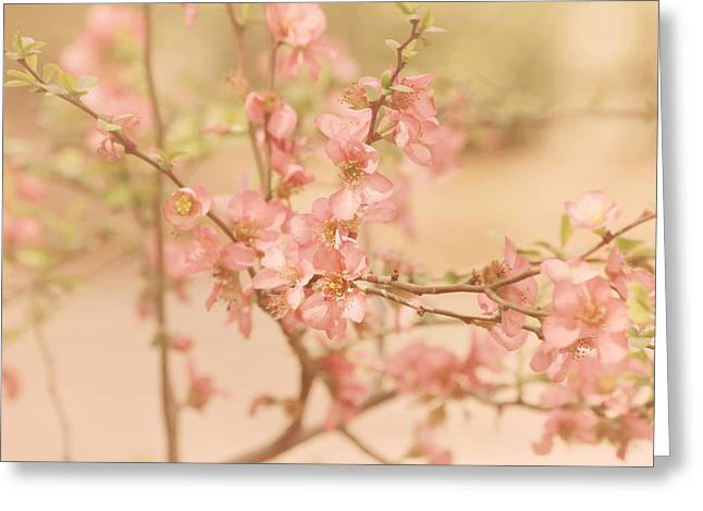 Pink Flower Branch Greeting Cards - Vintage Blossom Branch Greeting Card by Kim Hojnacki