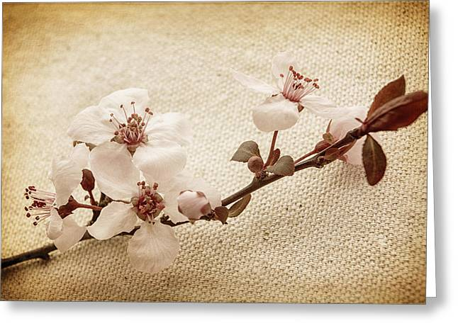 Plum Blossoms Greeting Cards - Vintage Blossoms Greeting Card by Caitlyn  Grasso