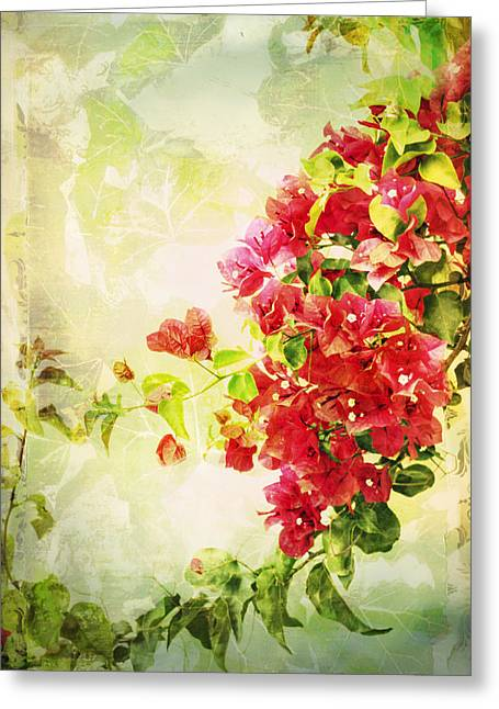 Nyctaginaceae Greeting Cards - Vintage Bougainvillea San Diego California Greeting Card by Marianne Campolongo