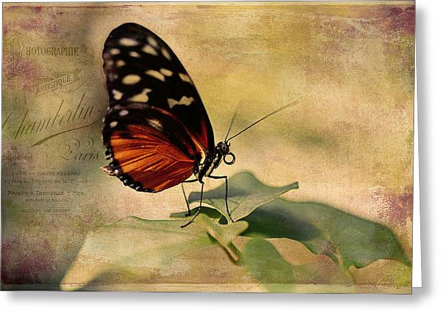 Close Up Floral Greeting Cards - Vintage Butterfly Card Greeting Card by Maria Angelica Maira