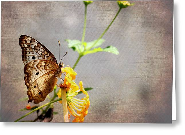 Floral Digital Art Greeting Cards - Vintage Butterfly Greeting Card by Judy Vincent