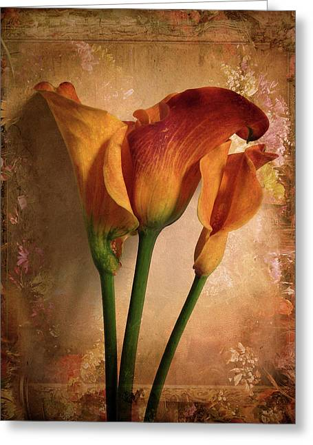 Petal Greeting Cards - Vintage Calla Lily Greeting Card by Jessica Jenney