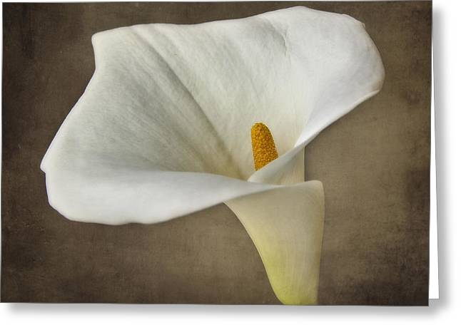 Elegant Bride Greeting Cards - Vintage Calla palustris Greeting Card by Erik Brede