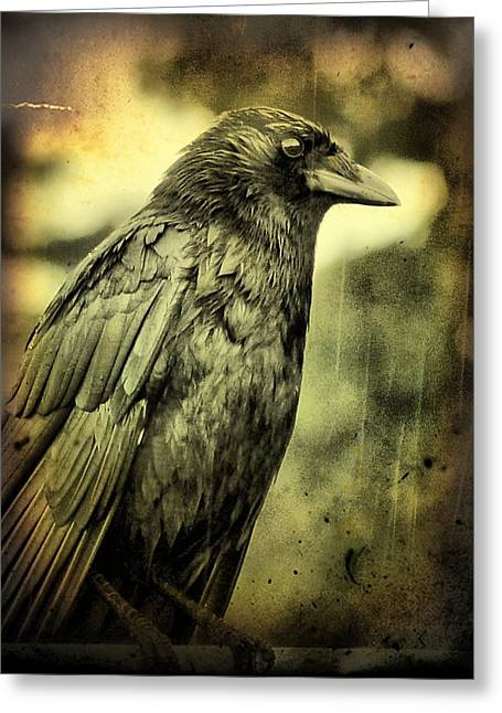 Vintage Style Photograph Greeting Cards - Vintage Crow Greeting Card by Gothicolors Donna Snyder