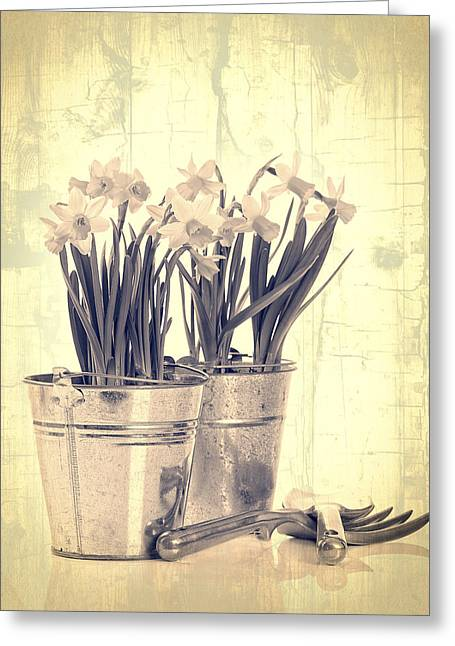 Bulb Flower Greeting Cards - Vintage Daffodils Greeting Card by Amanda And Christopher Elwell
