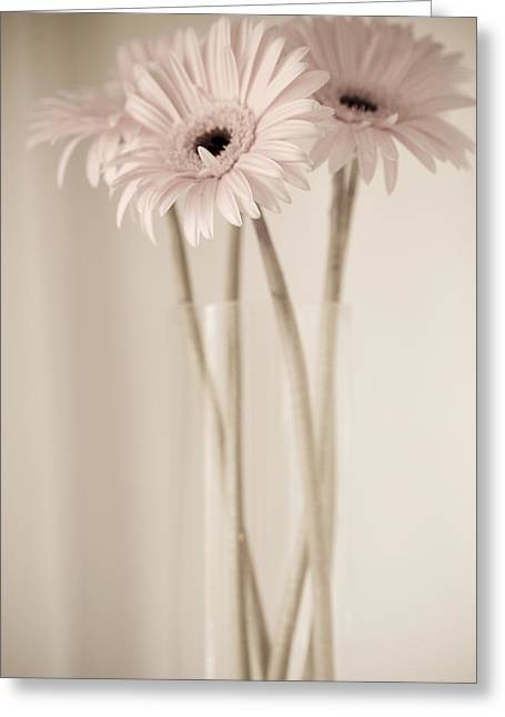 Julie Palencia Greeting Cards - Vintage Daisies  Greeting Card by Julie Palencia
