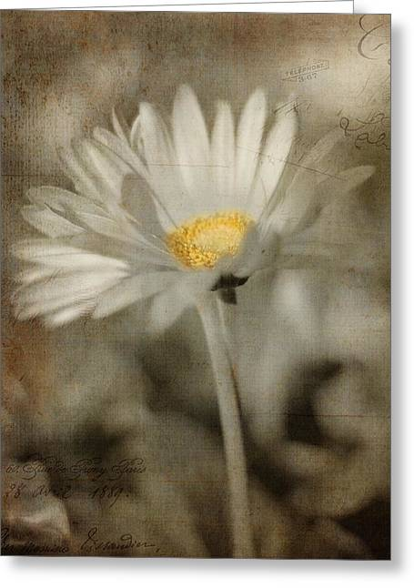 Texture Floral Pyrography Greeting Cards - Vintage Daisy Greeting Card by Joann Vitali