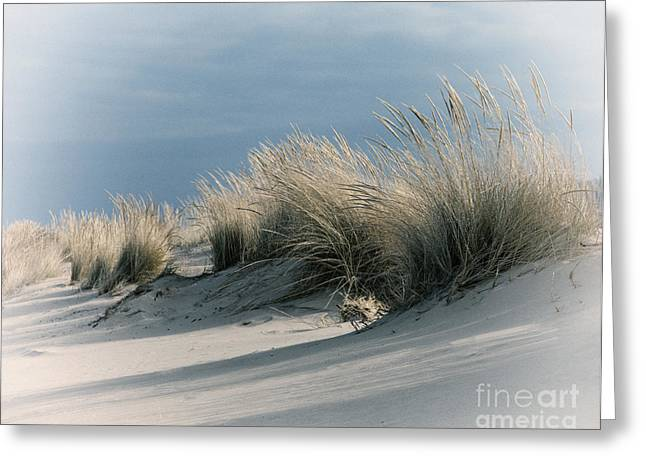 Indiana Dunes Greeting Cards - Dune Grass Greeting Card by Timothy Johnson