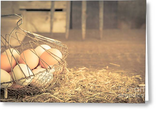 Coop Greeting Cards - Vintage eggs in wire basket Greeting Card by Edward Fielding