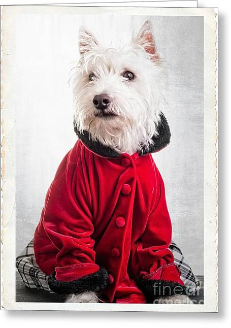 Dog Photo Greeting Cards - Vintage Fashion Dog Greeting Card by Edward Fielding