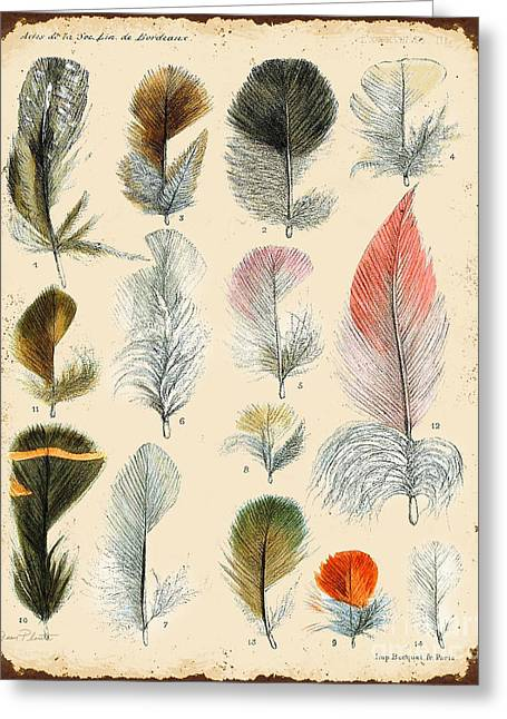Nature Study Digital Greeting Cards - Vintage Feather Study-B Greeting Card by Jean Plout