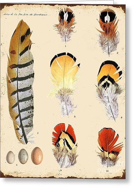Study Of Birds Greeting Cards - Vintage Feather Study-D Greeting Card by Jean Plout