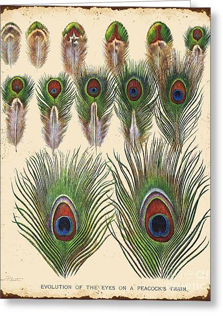 Nature Study Digital Greeting Cards - Vintage Feather Study-JP2084 Greeting Card by Jean Plout