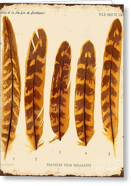 Nature Study Digital Greeting Cards - Vintage Feather Study-JP2086 Greeting Card by Jean Plout